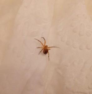 Big Hairy Spider